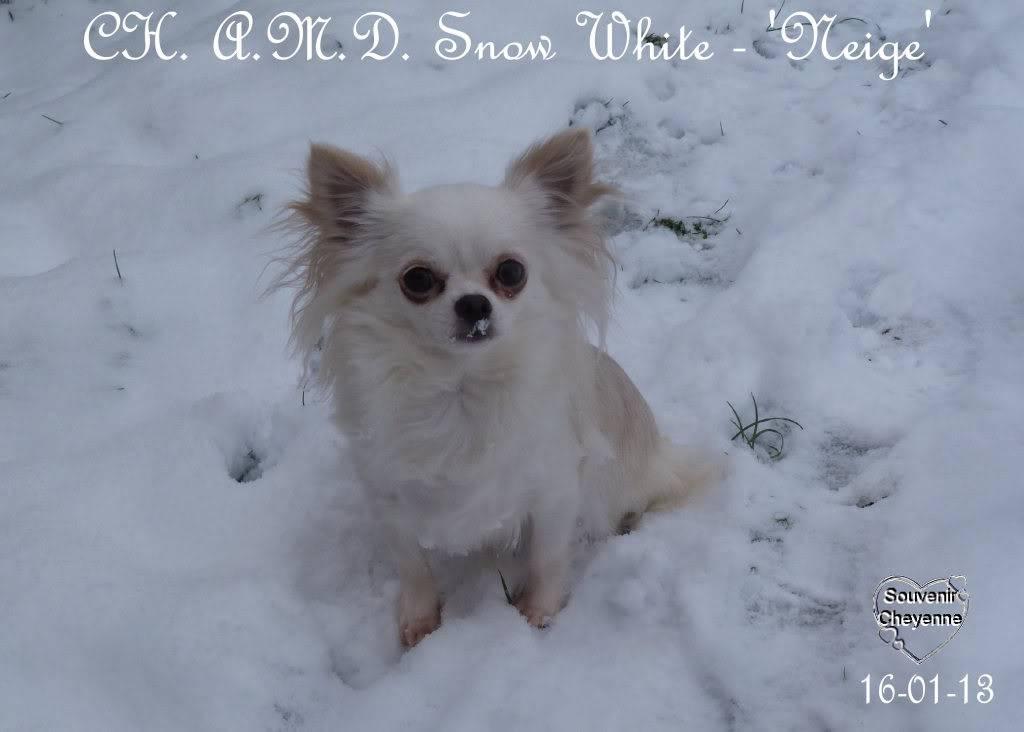 Snow White dite Neige - Page 4 16-01-13SNOW226