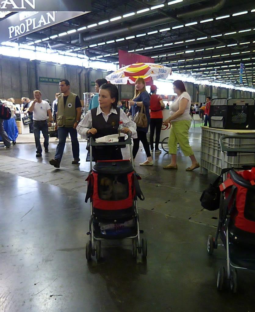 JAPAN CHIN 'Aika'  - Page 2 CHFRWWVilllepinte2011716