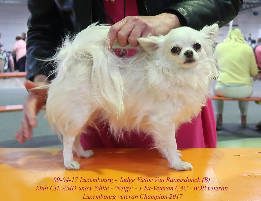 Neige Championne des Vétérans de Luxembourg  IMG_0463_zpso8y4qycs
