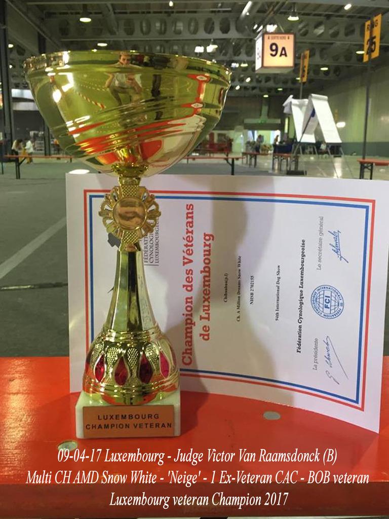 Neige Championne des Vétérans de Luxembourg  Neige%20coupe%20c_zps4camsxbc