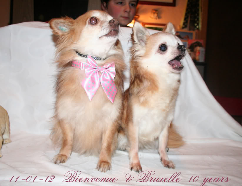 Soeurettes Bruxelle & Bienvenue  15 ans - Page 3 IMG_8986