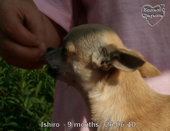 Ishiro Souvenir Cheyenne 23-06-10BBs430