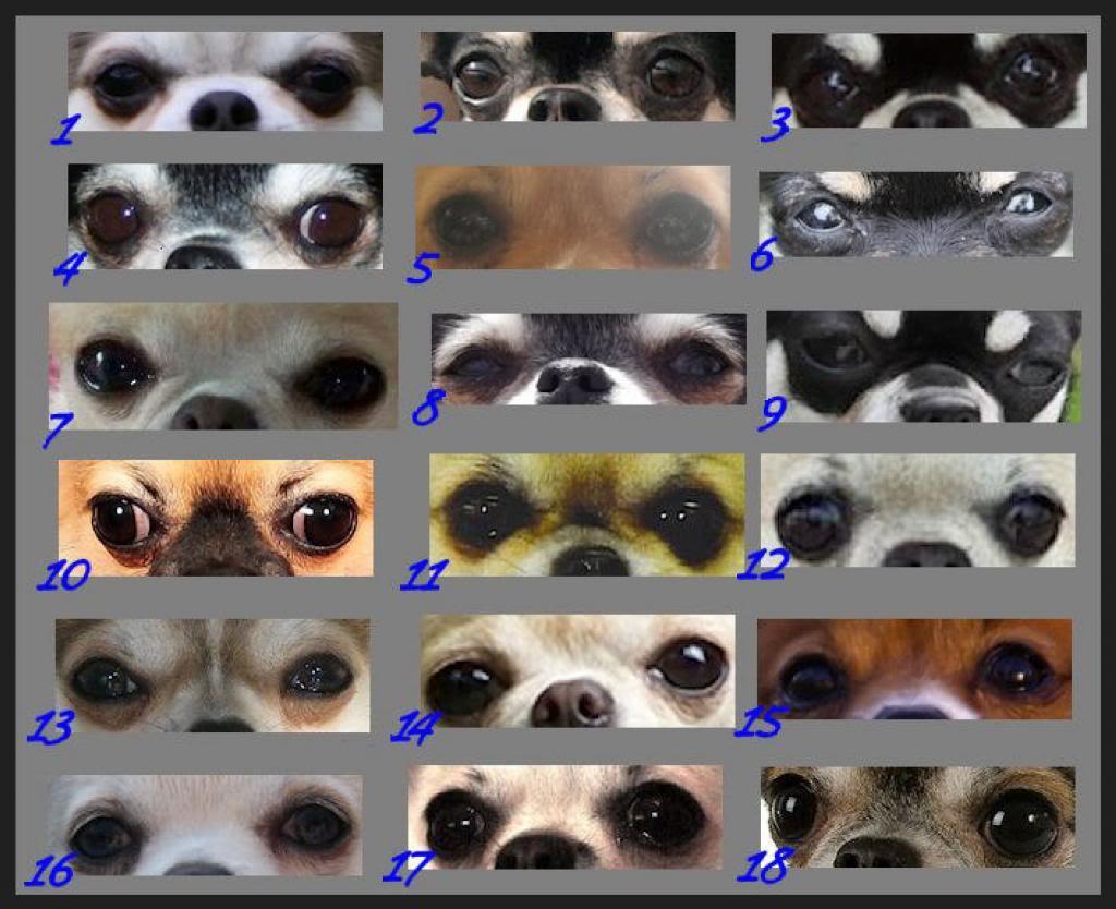 yeux, pigmentation et expressions    Eyesimageb_zps5f2767a3