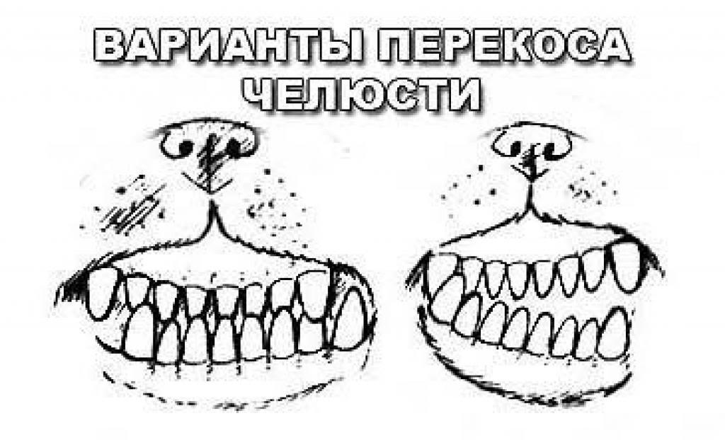 Les dents et machoires  Teethegebita_zps3e6068f6