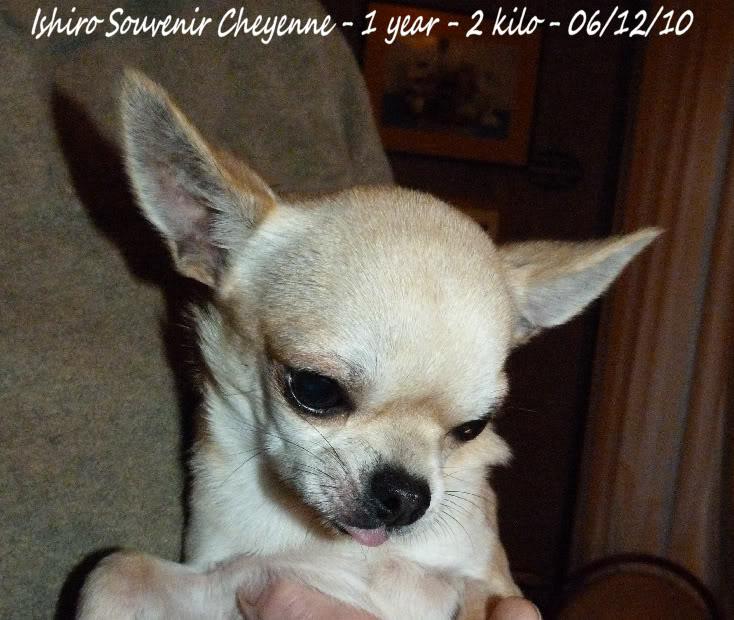 Ishiro Souvenir Cheyenne 06-12-10Ishiroanniv1an035b