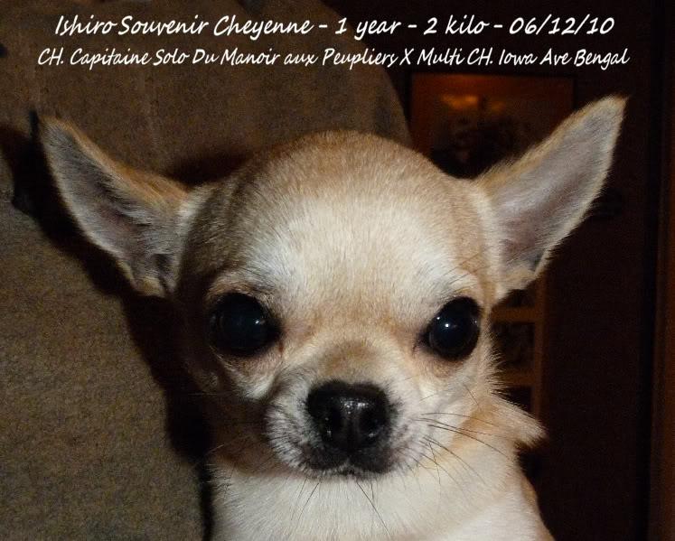 Ishiro Souvenir Cheyenne 06-12-10Ishiroanniv1an036b