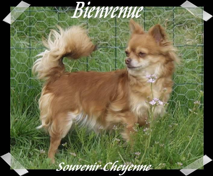 Soeurettes Bruxelle & Bienvenue  15 ans - Page 3 6Bienvenue