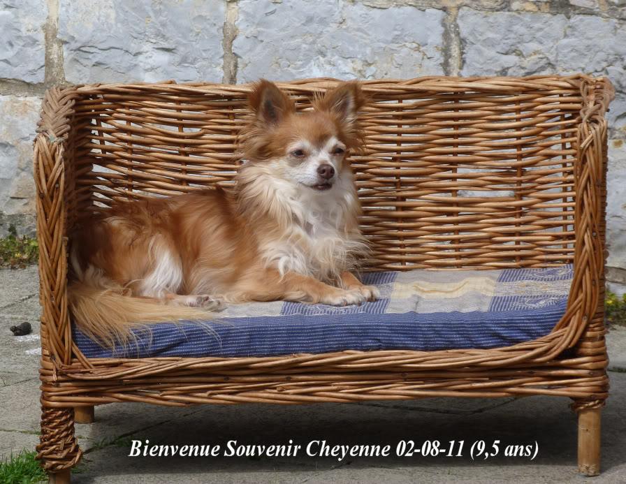 Soeurettes Bruxelle & Bienvenue  15 ans - Page 3 P1150665