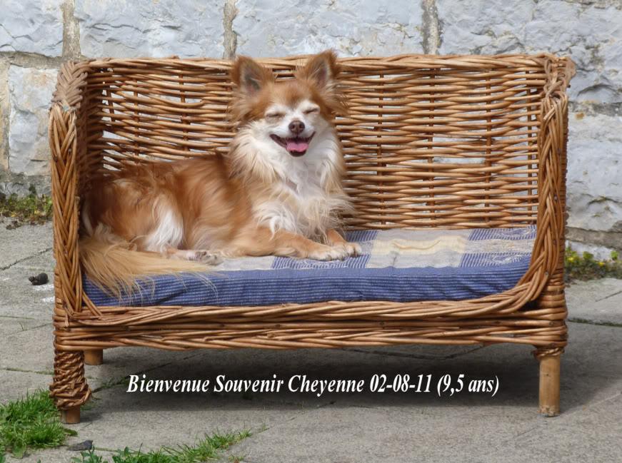 Soeurettes Bruxelle & Bienvenue  15 ans - Page 3 P1150666