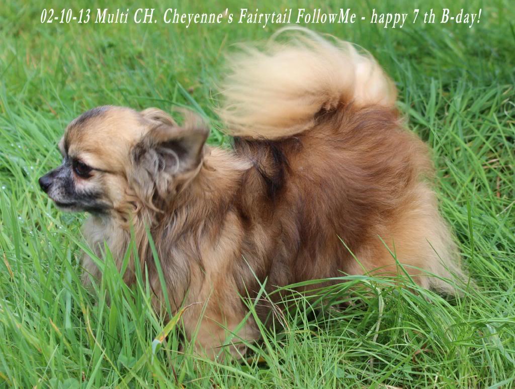 FollowMe & Feronia  - Page 3 IMG_1057_zps56071871