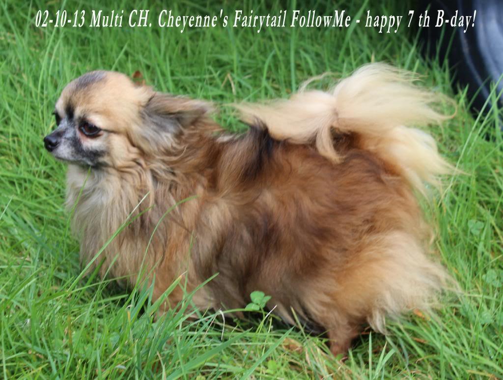 FollowMe & Feronia  - Page 3 IMG_1067_zps4d97eccb