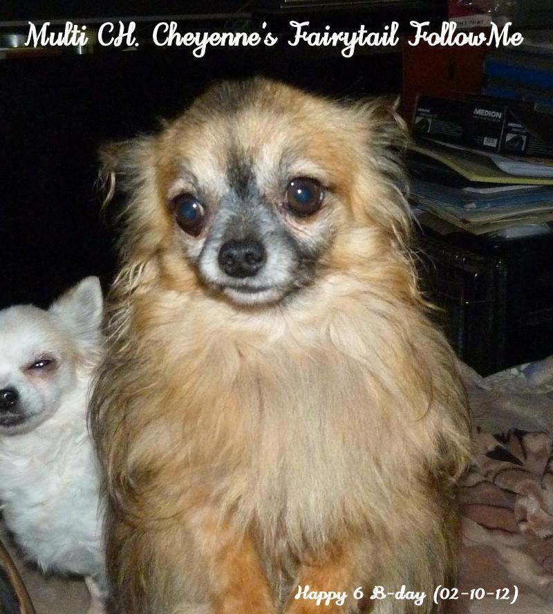 FollowMe & Feronia  - Page 2 P1410520