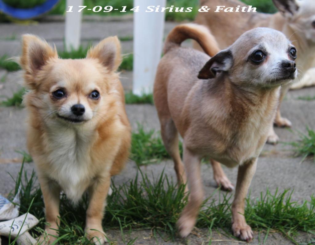 Faith & ForeverEmi   - Page 2 IMG_1900_zpsdc0a023e