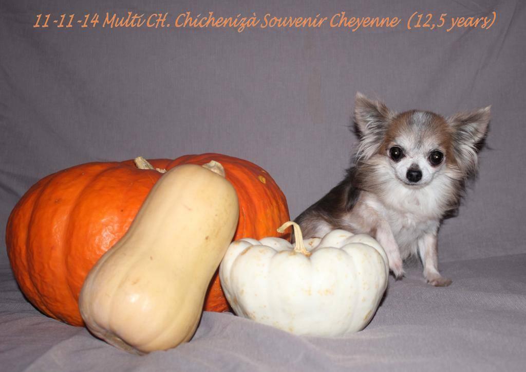 Chichenizà mon p'tit oeuf 14 ans de bonheur - Page 6 IMG_0814name_zpsa025292a