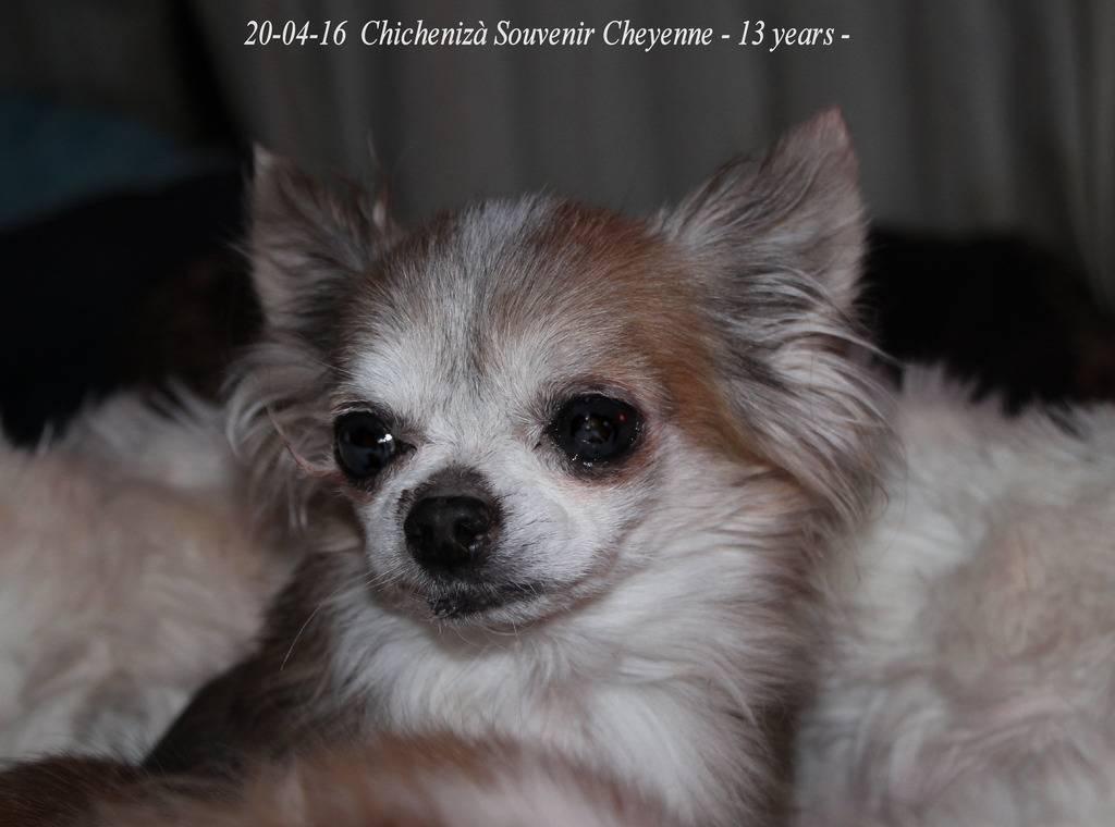 Chichenizà mon p'tit oeuf 14 ans de bonheur - Page 8 IMG_4117%20Izagrave_zpsjc4stpch