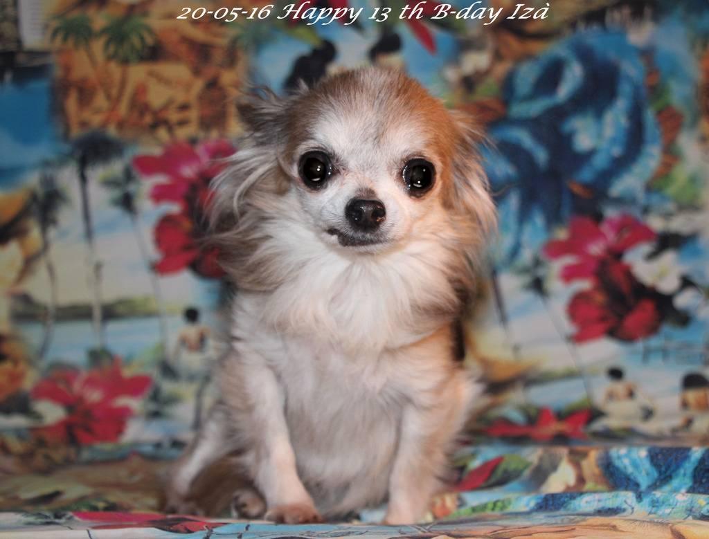Chichenizà mon p'tit oeuf 14 ans de bonheur - Page 8 IMG_5813_zpsfb9iaf8g