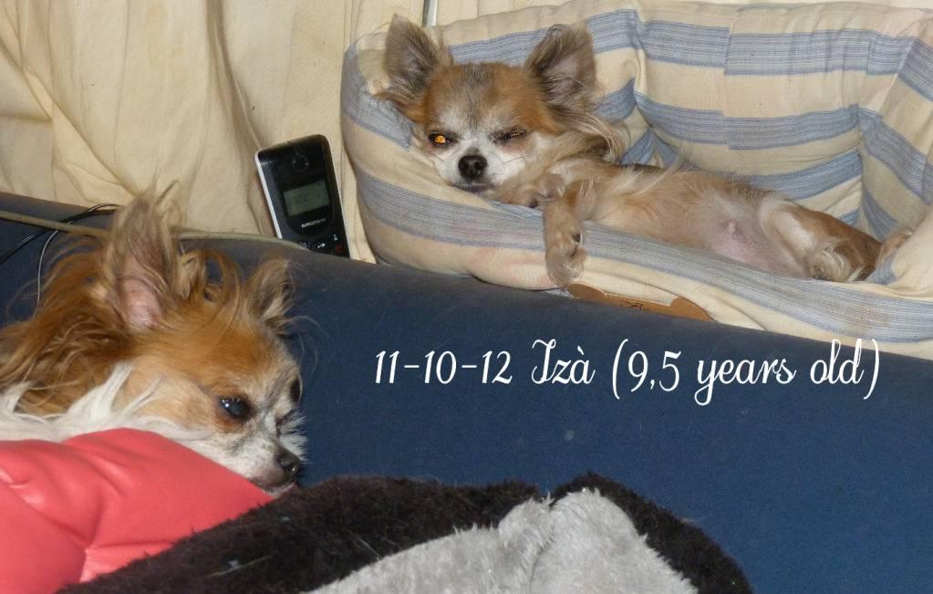 Chichenizà mon p'tit oeuf 14 ans de bonheur P1410835