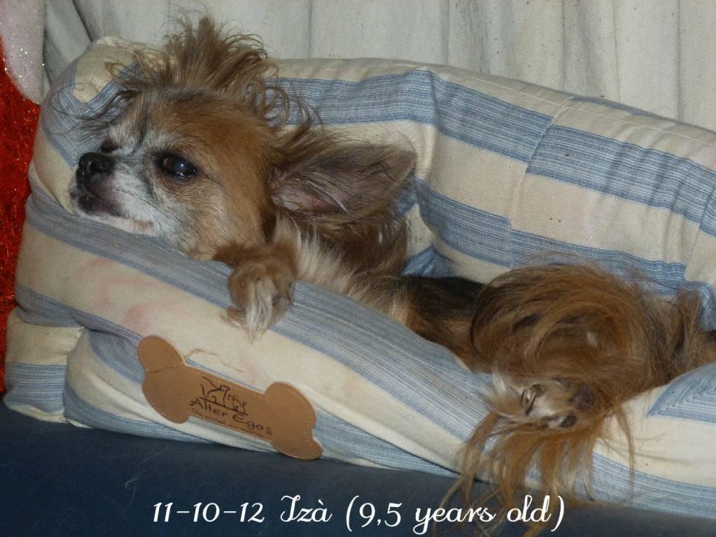 Chichenizà mon p'tit oeuf 14 ans de bonheur P1420133