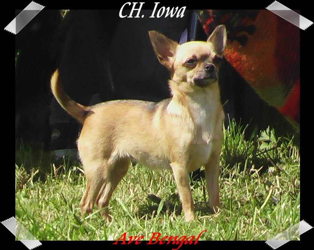 Mammy Iowa (Multi CH. Iowa Ave Bengal)  26Iowa