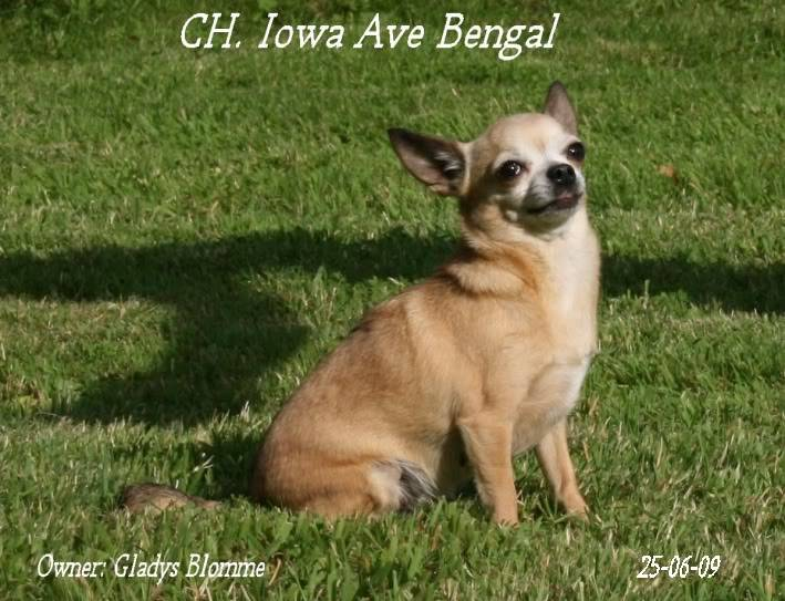 Mammy Iowa (Multi CH. Iowa Ave Bengal)  Iowa2chistuin24-6-09264