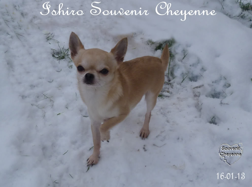 Ishiro Souvenir Cheyenne Ishiro16-01-13SNOW189