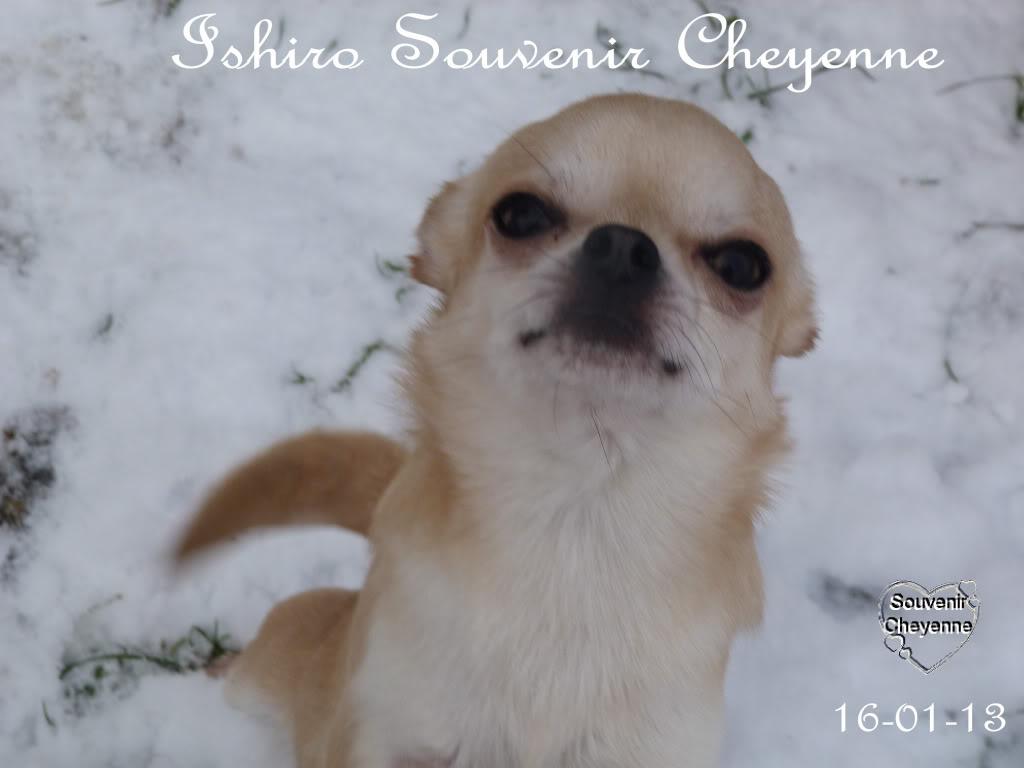 Ishiro Souvenir Cheyenne Ishiro16-01-13SNOW240