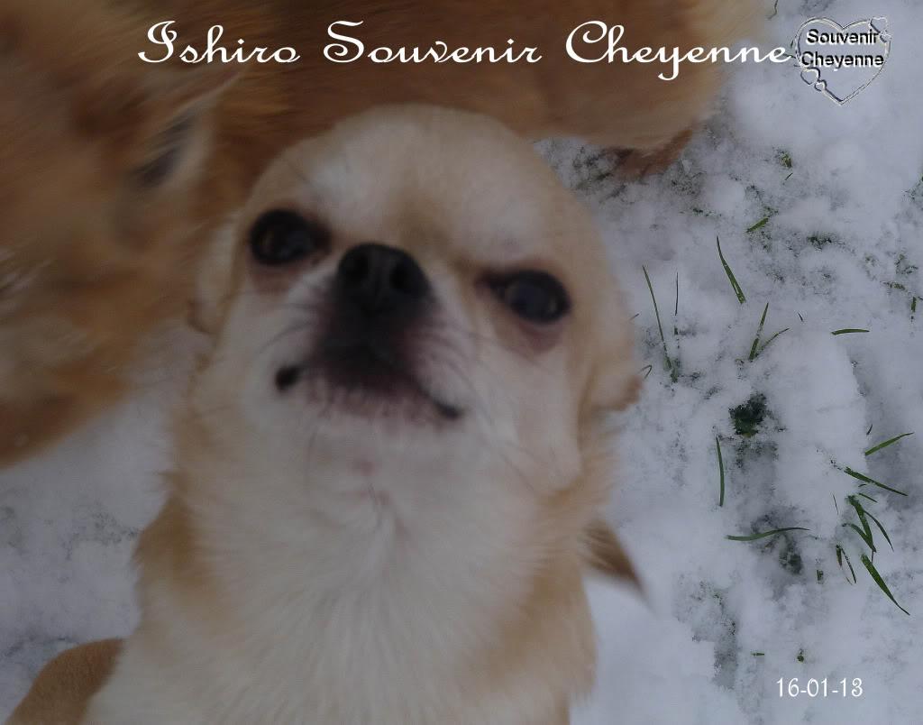 Ishiro Souvenir Cheyenne Ishiro16-01-13SNOW241