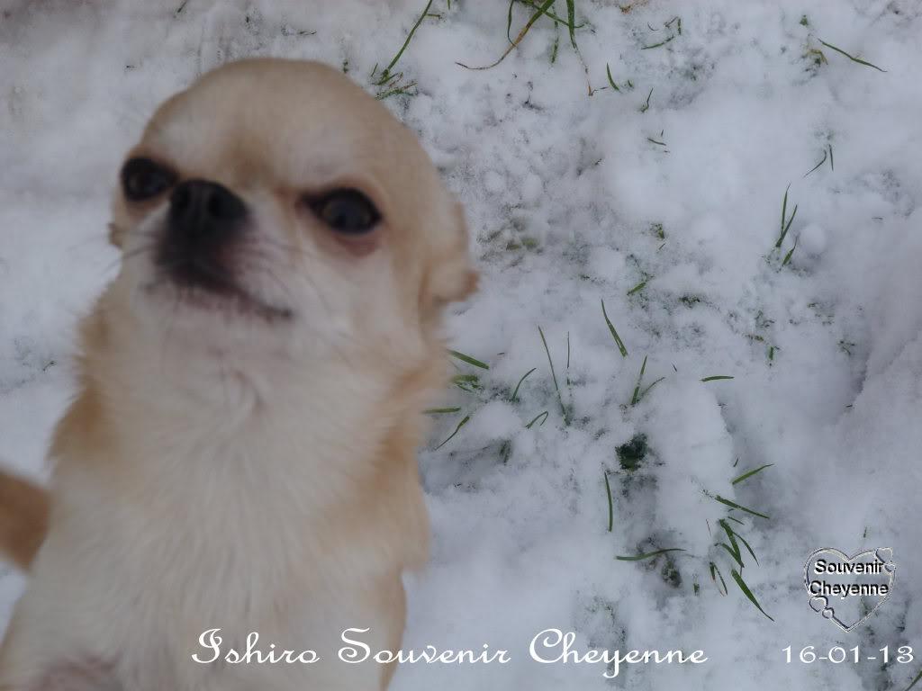 Ishiro Souvenir Cheyenne Ishiro16-01-13SNOW242