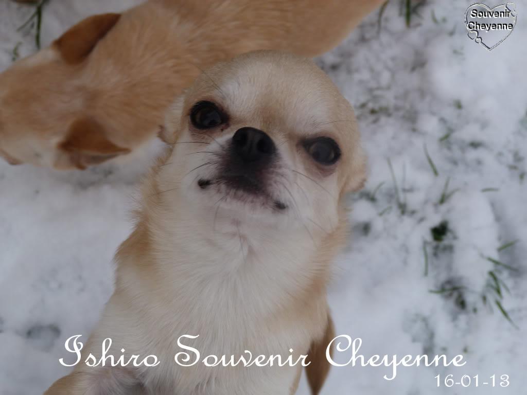 Ishiro Souvenir Cheyenne Ishiro16-01-13SNOW243