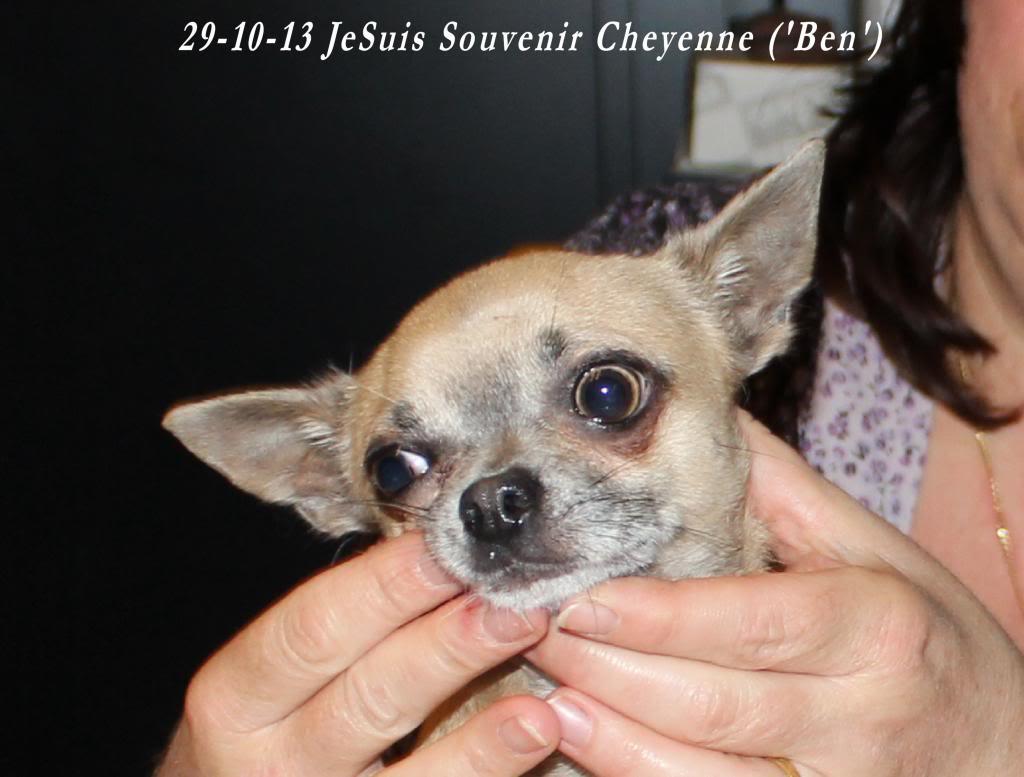 JeSuis (Ben) & JeReste (Stay ) IMG_2950_zps2e2c33d7