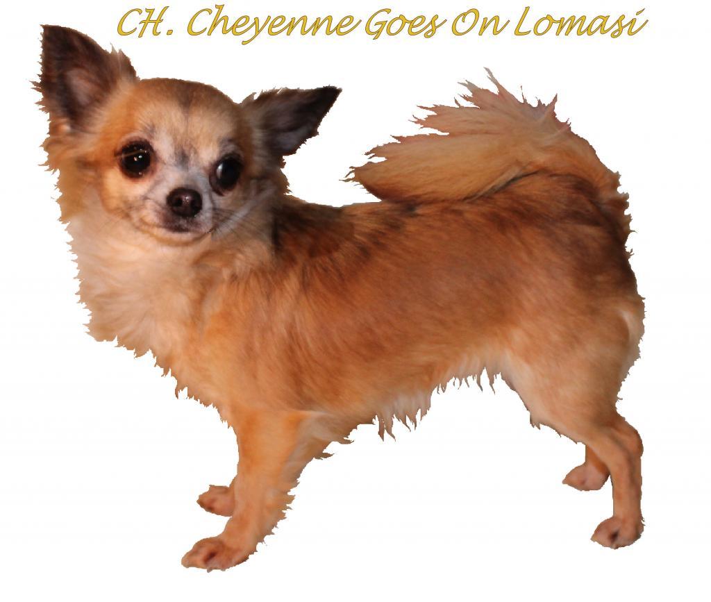 CH. Lomasi Championne VDH 2014!! LomassiuitsnedebPOST_zpse739b567
