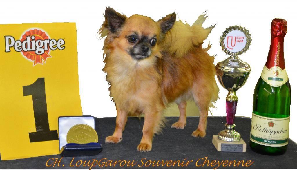 CH. LoupGarou Champion VDH Allemagne 2014 !  LoupGarouSouvenirCheyennePOST_zpsff15811f