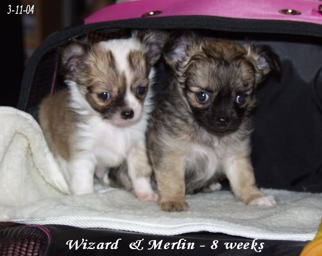 Wizard & Merlin 13-09-04 - Page 2 BROTHERS03-1