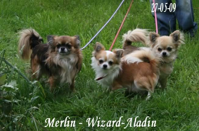 Wizard & Merlin 13-09-04 - Page 2 IMG_6719