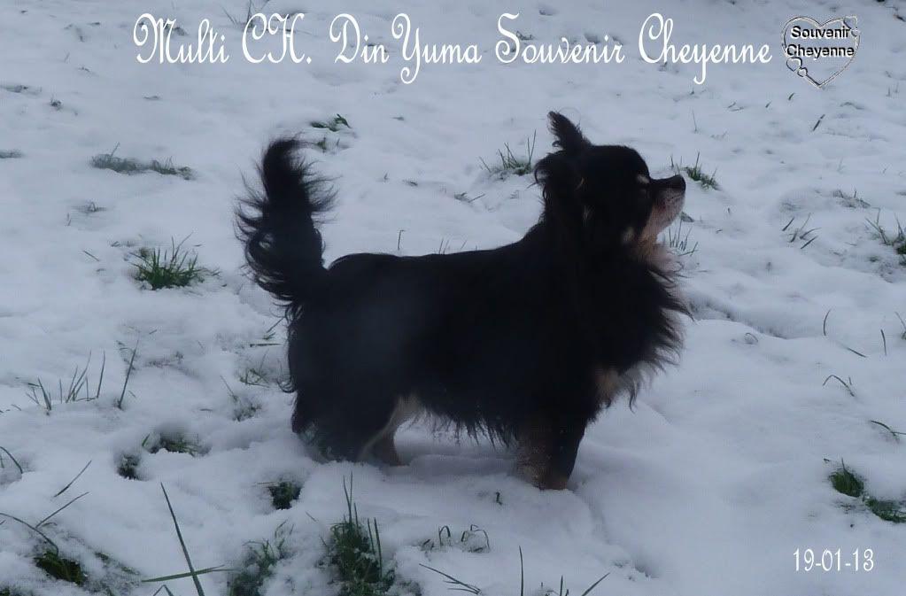 Yuma book !  - Page 4 Yuma19-01-13SNOW160