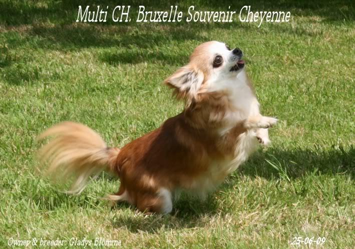 Soeurettes Bruxelle & Bienvenue  15 ans - Page 6 Bruxelle3chistuin26-6-09112