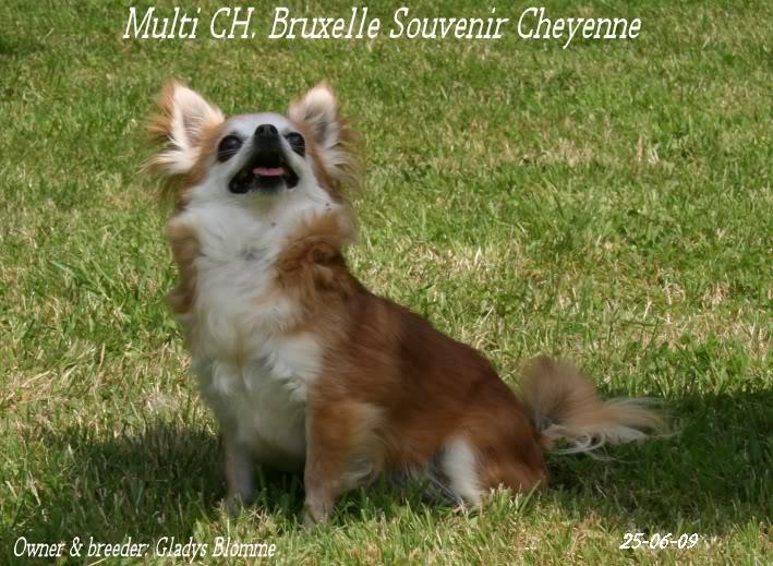 Soeurettes Bruxelle & Bienvenue  15 ans - Page 6 Bruxelle3chistuin26-6-09115