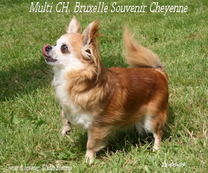 Soeurettes Bruxelle & Bienvenue  15 ans - Page 6 Bruxelle3chistuin26-6-09119-1