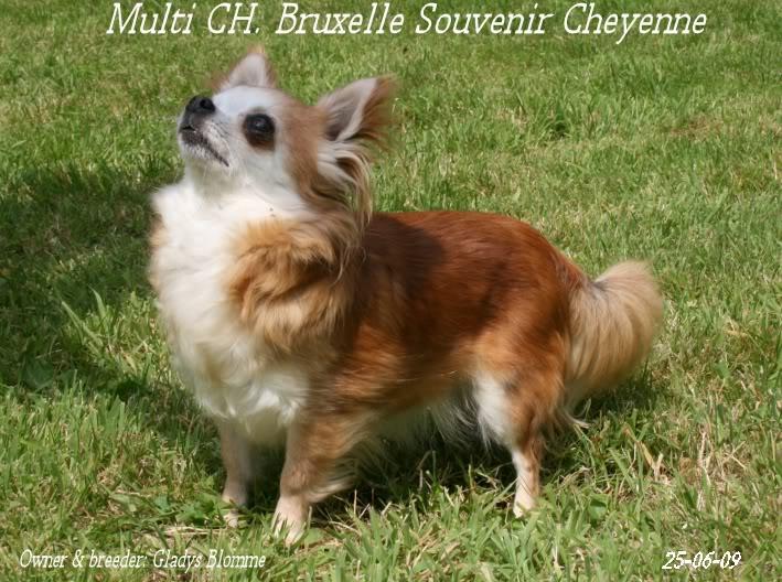 Soeurettes Bruxelle & Bienvenue  15 ans - Page 6 Bruxelle3chistuin26-6-09122