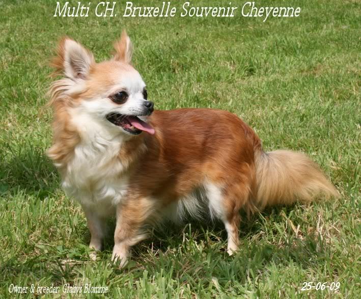 Soeurettes Bruxelle & Bienvenue  15 ans - Page 6 Bruxelle3chistuin26-6-09125
