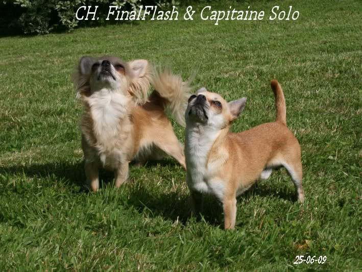 Multi CH. FinalFlash - Page 5 Capiflash1chistuin24-6-09130