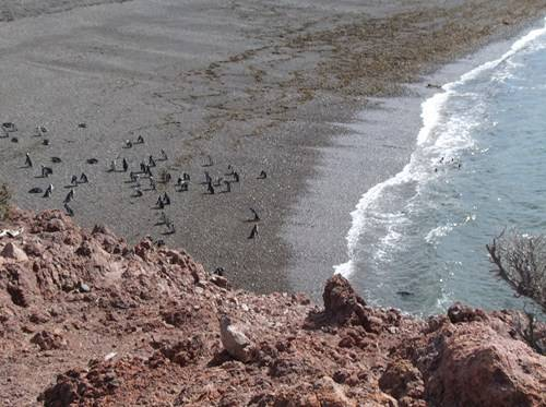 Viaje a Puerto Madryn  2014 Aa24_zps48f21e19