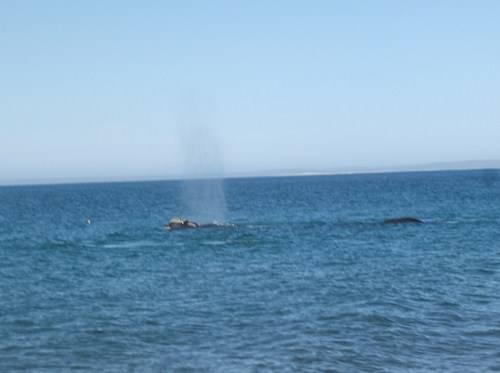 Viaje a Puerto Madryn  2014 Bt20_zps82d1d310