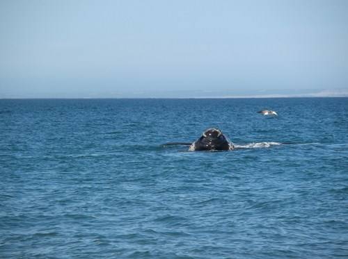 Viaje a Puerto Madryn  2014 Bt21_zpsb194a952