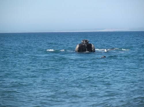 Viaje a Puerto Madryn  2014 Bt22_zps7a0c9075