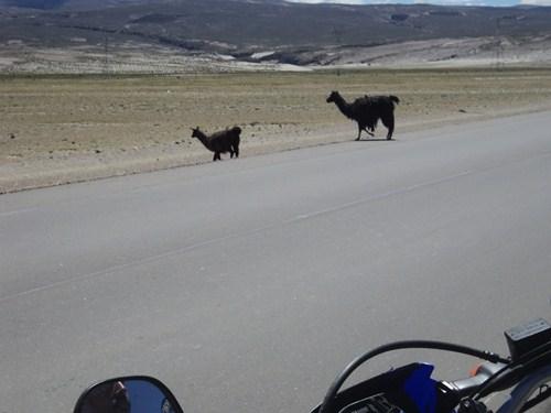 Ruta 40 Norte, algo de Bolivia y Chile - Página 2 DSC01764_zps56a9887f