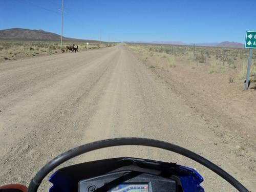 Ruta 40 Norte, algo de Bolivia y Chile - Página 2 DSC01843_zpsb4895256