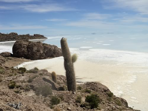 Ruta 40 Norte, algo de Bolivia y Chile - Página 2 DSC01582