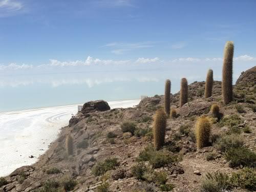 Ruta 40 Norte, algo de Bolivia y Chile - Página 2 DSC01583