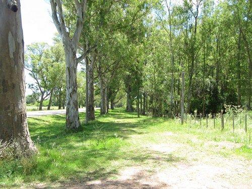 Uruguay Noviembre 2012 - Página 2 IMG_2685_zpsb65fc417